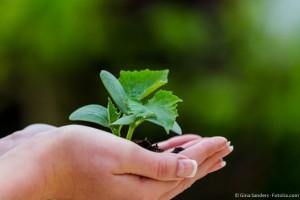 Wachstum schreibt kein Tempo vor ...