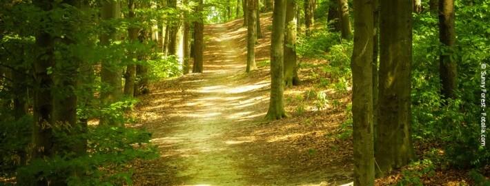 Mithilfe von Beratung Schritte wagen, Veränderungen angehen